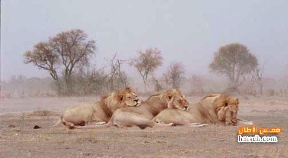 أوكافنجو.. أفريقية! hmseh-14063885c1.jpg