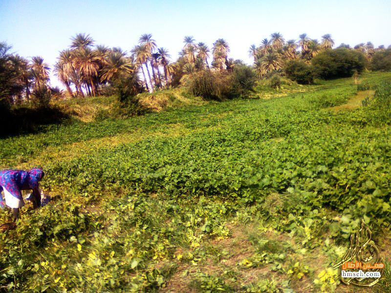 السودان hmseh-6ddc91e70f.jpg