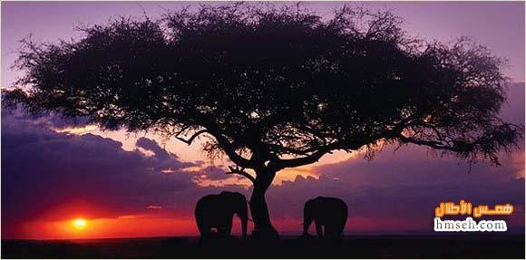 أوكافنجو.. أفريقية! hmseh-7877df5b30.jpg
