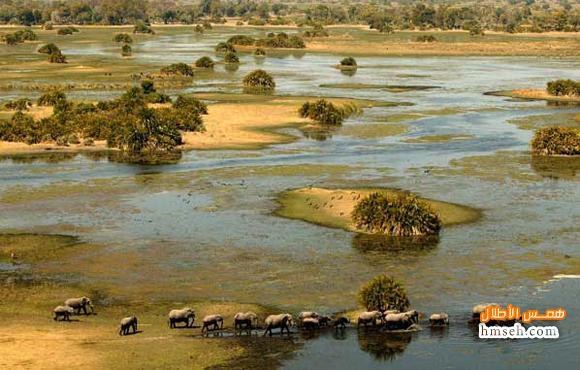 أوكافنجو.. أفريقية! hmseh-83ea9c7711.jpg