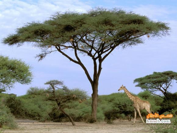 أوكافنجو.. أفريقية! hmseh-c44fa13238.jpg